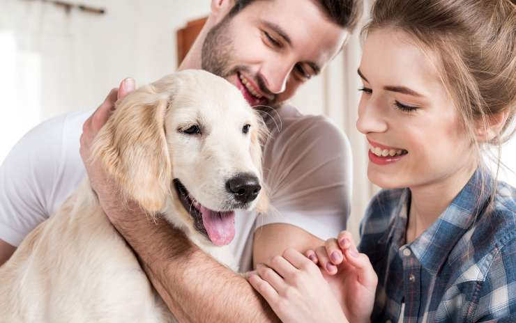 Taking Care of Your Aging Dog